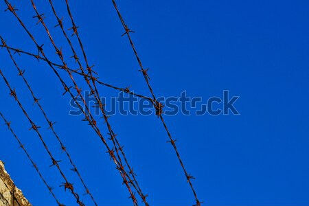 Barbed wire Stock photo © Lio22