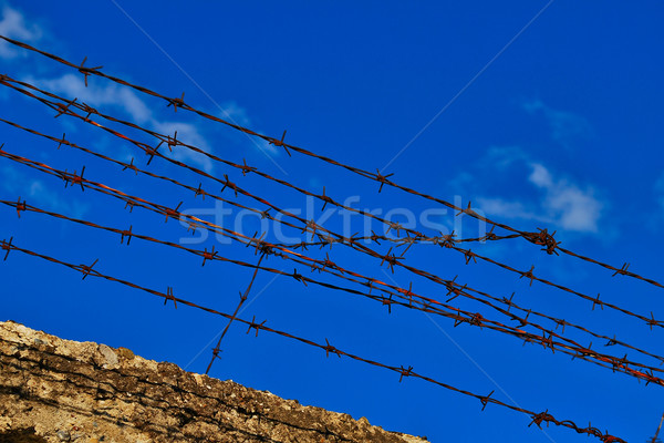 Barbed wire fence Stock photo © Lio22