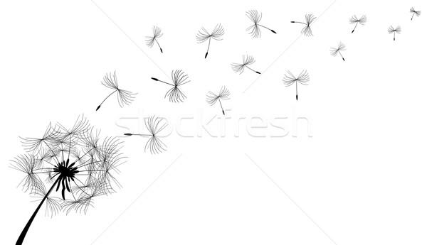 タンポポ 花 黒白 夏 黒 工場 ストックフォト © liolle