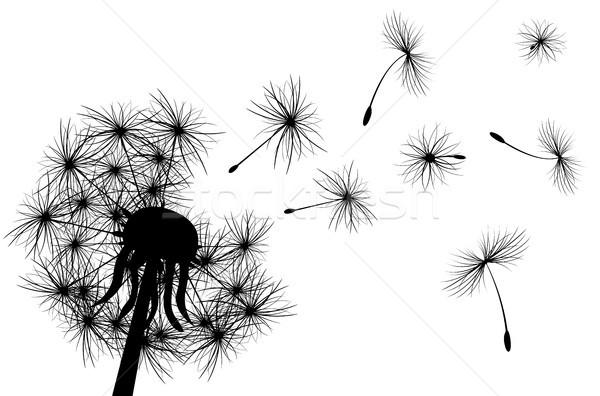 Pissenlit usine silhouette blanche fleur printemps Photo stock © liolle