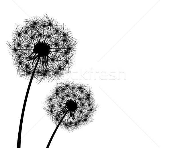 Paardebloem plant bloei silhouet witte bloem Stockfoto © liolle