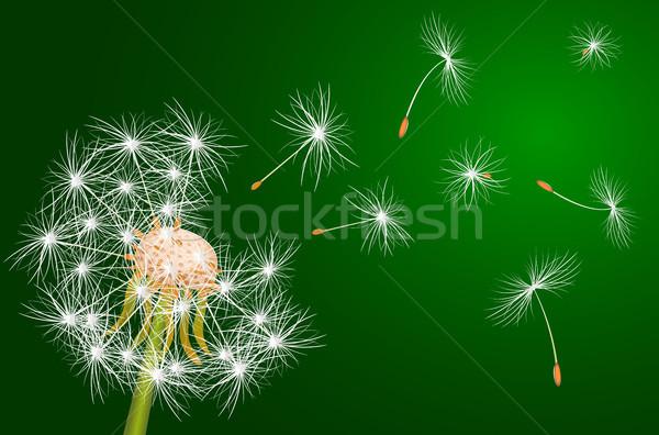 タンポポ 開花 工場 白 緑 花 ストックフォト © liolle