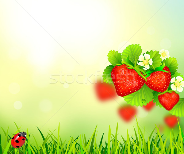 Strawberry, summer background  Stock photo © liolle