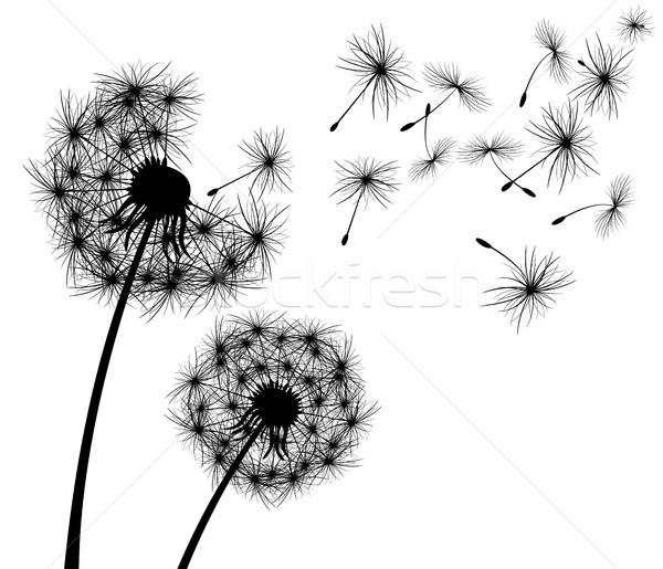 Paardebloem bloem bloei plant silhouet witte Stockfoto © liolle
