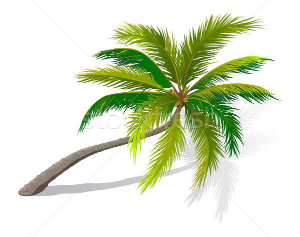 Curved palm tree  Stock photo © liolle