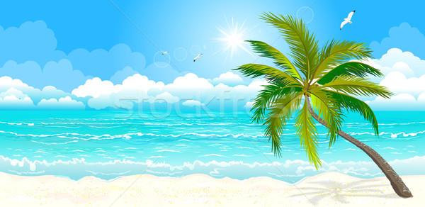 熱帯ビーチ 風景 熱帯 海岸 海 ヤシの木 ストックフォト © liolle