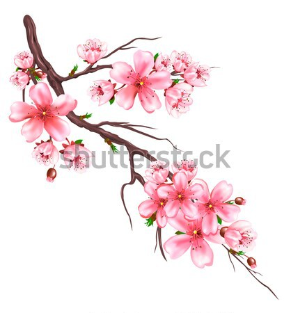 цветения сакура филиала дерево белый розовый Сток-фото © liolle