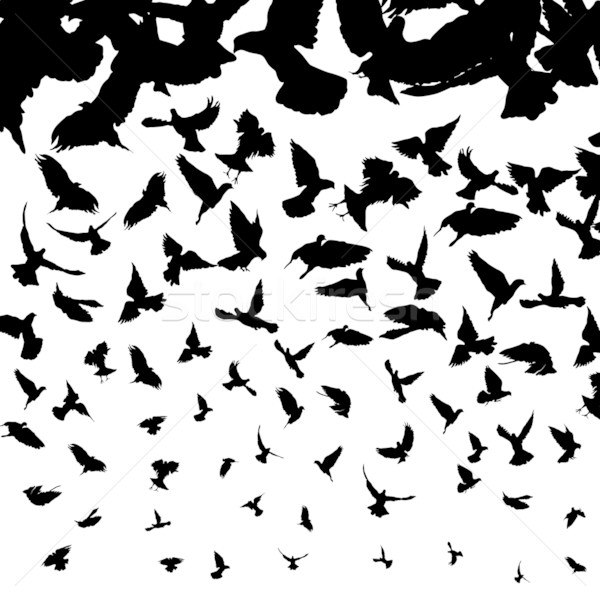 Flying птиц иллюстрация птица тело Сток-фото © lirch