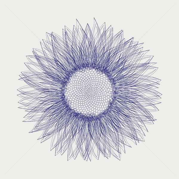 Sunflower sketch design Stock photo © lirch