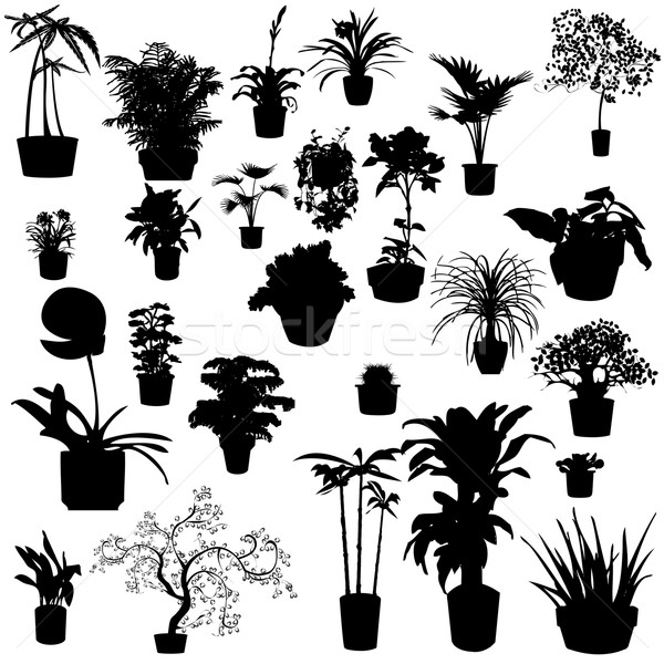 Potted plants Stock photo © lirch