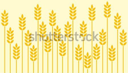 Trigo campo de trigo natureza fazenda milho desenho Foto stock © lirch