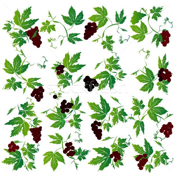 Grapes Stock photo © lirch