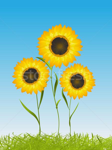 лет карт подсолнухи весны время цветочный Сток-фото © lirch