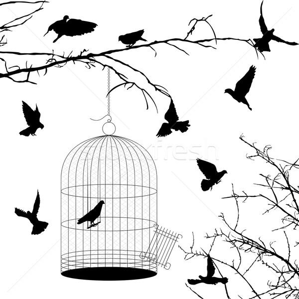 Kuşlar kafes siluetleri beyaz grup siyah Stok fotoğraf © lirch