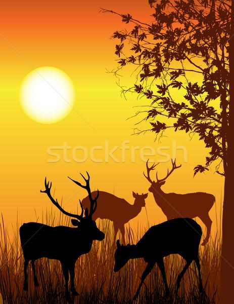 Szarvas kártya illusztráció vad erdő fa Stock fotó © lirch
