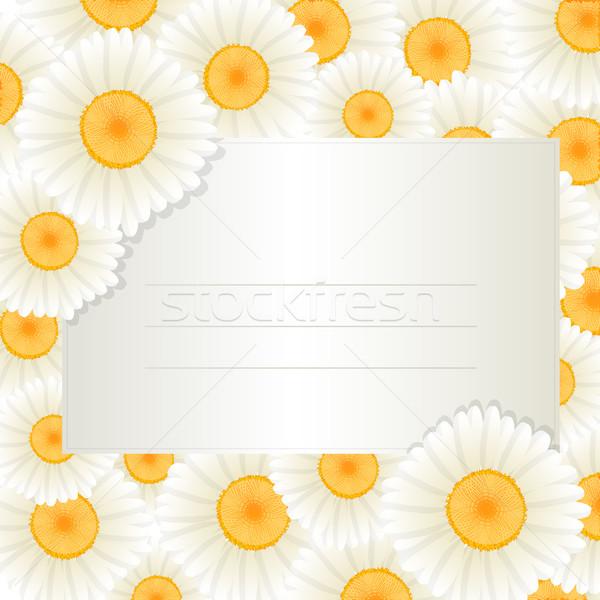 Oxeye daisy text card Stock photo © lirch
