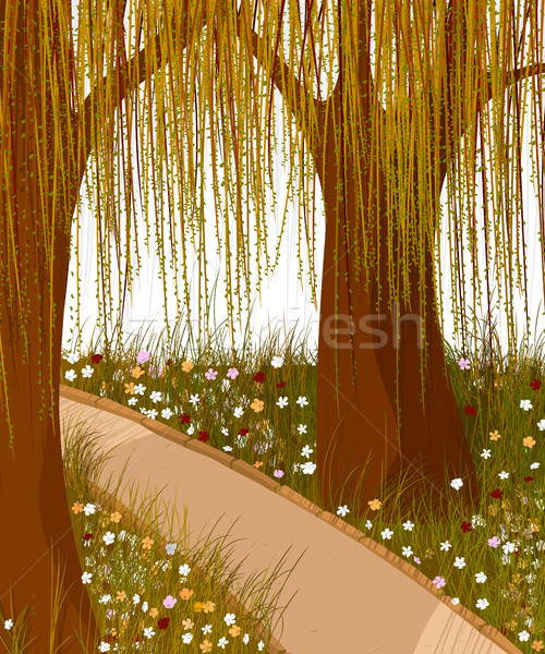 Stock photo: Willow forest background