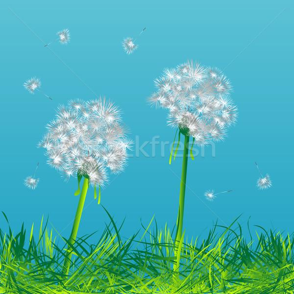 Pissenlits deux vent ciel fleur lumière Photo stock © lirch