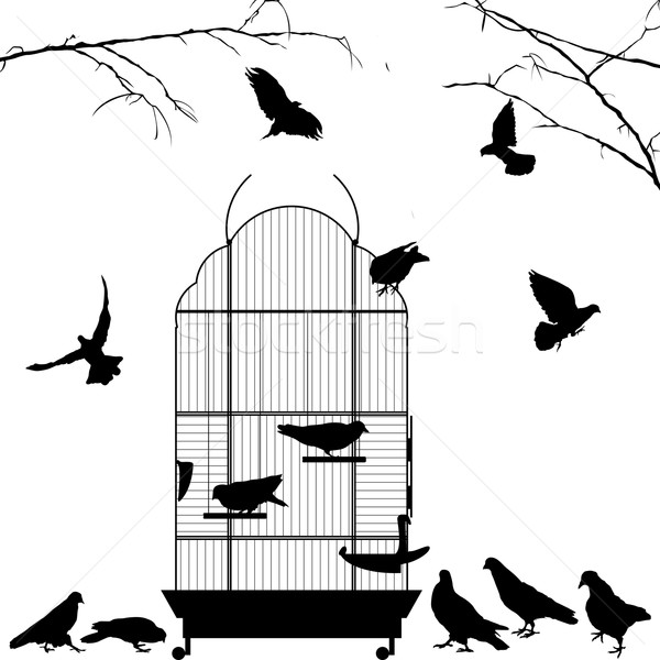 Open bird cage and birds Stock photo © lirch