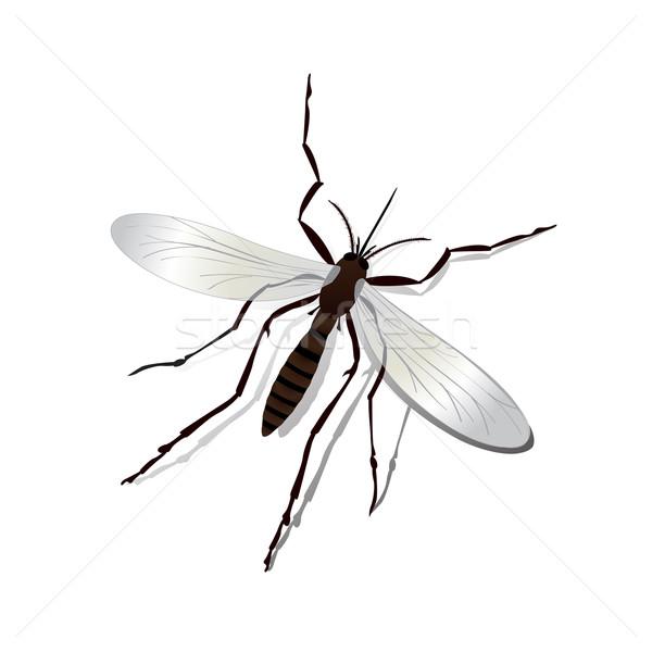 蚊 現実的な 影 実例 孤立した オブジェクト ストックフォト © lirch