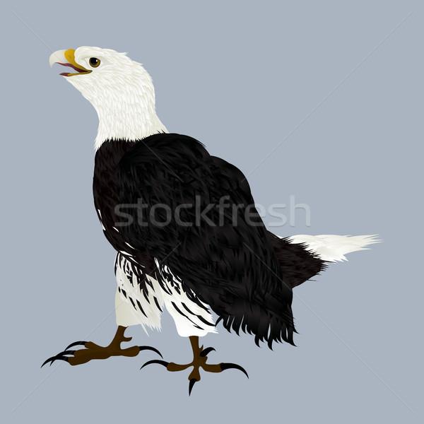 американский орел иллюстрация природы дизайна искусства Сток-фото © lirch