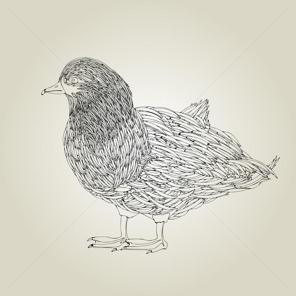 Duck Stock photo © lirch