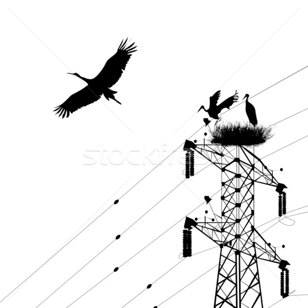 Stork Stock photo © lirch