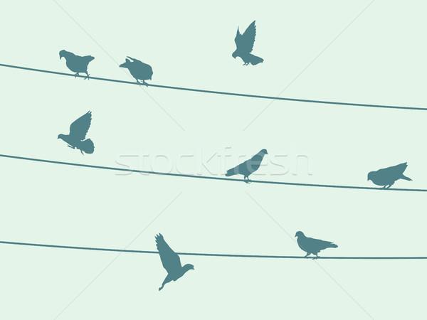 Birds on wire Stock photo © lirch