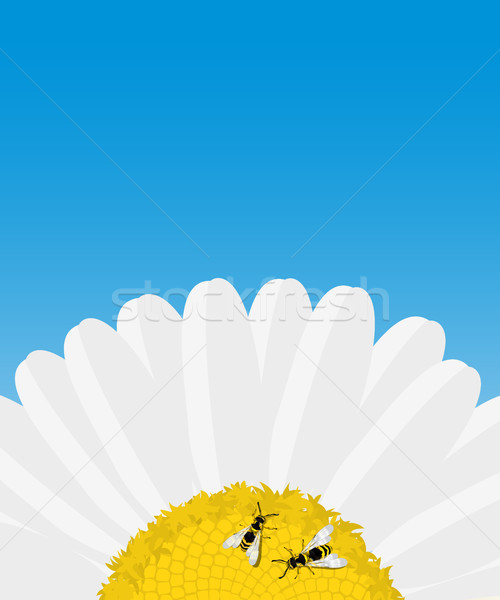 Stock photo: Daisy and bees card