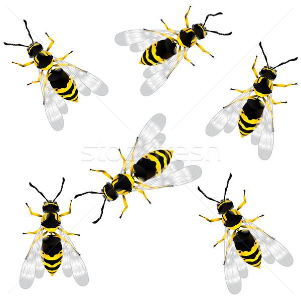 wasp Stock photo © lirch
