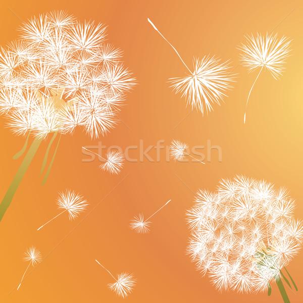 Foto stock: Dandelion · ilustração · céu · flor · grama · luz
