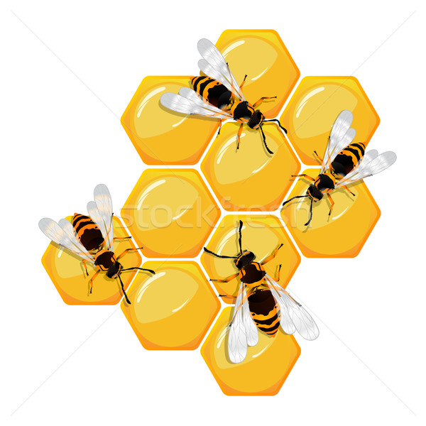 Bees on a honeycomb Stock photo © lirch