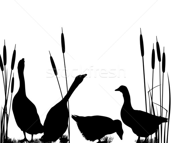 Goose silhouettes Stock photo © lirch