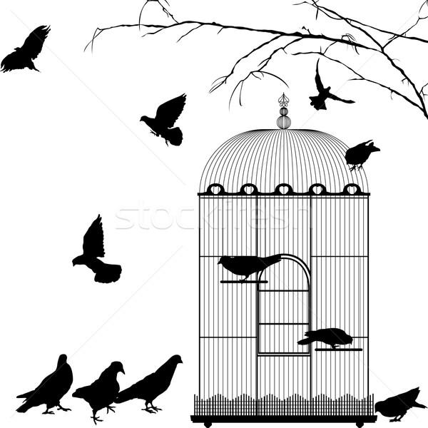 Birdcage and birds Stock photo © lirch