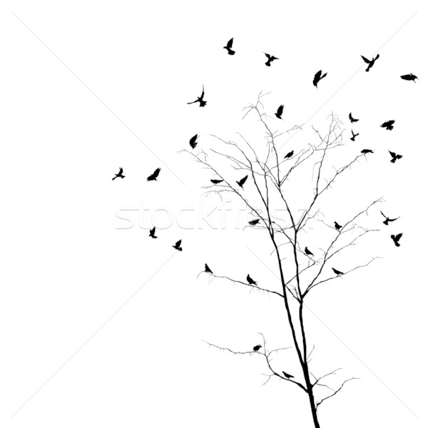 Birds and tree silhouettes Stock photo © lirch