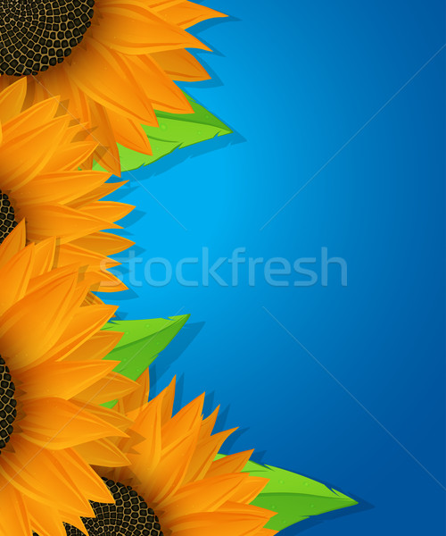Sunflowers and leaves card  Stock photo © lirch