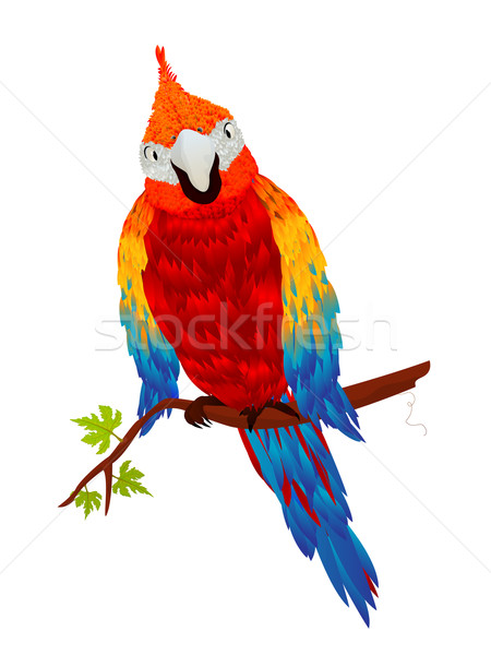 Starring parrot Stock photo © lirch