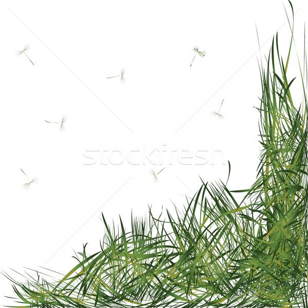 трава листьев одуванчик фон зеленый ветер Сток-фото © lirch