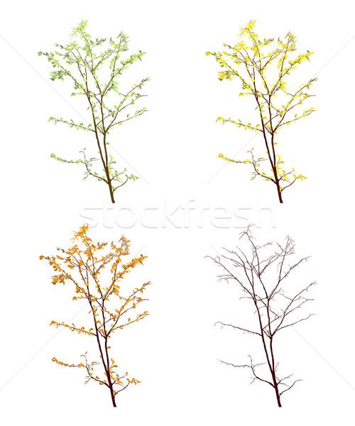 Négy évszak kilátás fa fehér tavasz művészet Stock fotó © lirch