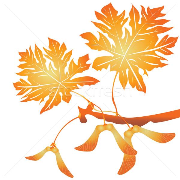 Maple tree seeds Stock photo © lirch