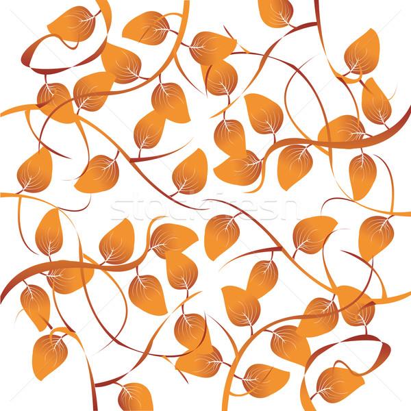 Sonbahar yaprakları örnek yalıtılmış yaprakları beyaz ağaç Stok fotoğraf © lirch