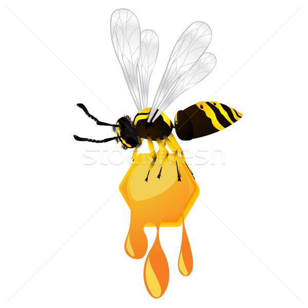 Wesp honing honingraat geïsoleerd object Stockfoto © lirch