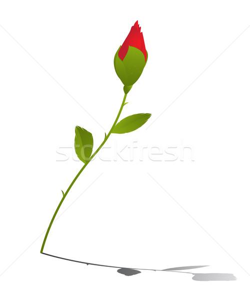 Giovani rosa Rose Red riflessione bianco fiore Foto d'archivio © lirch