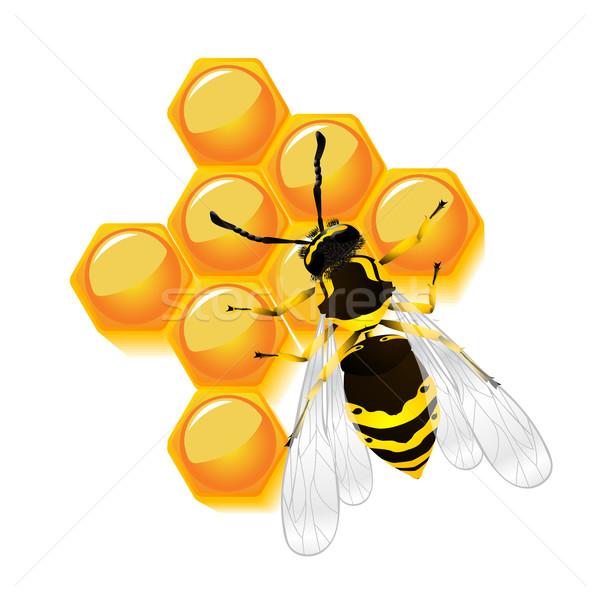 Wesp honingraat geïsoleerd object witte achtergrond Stockfoto © lirch