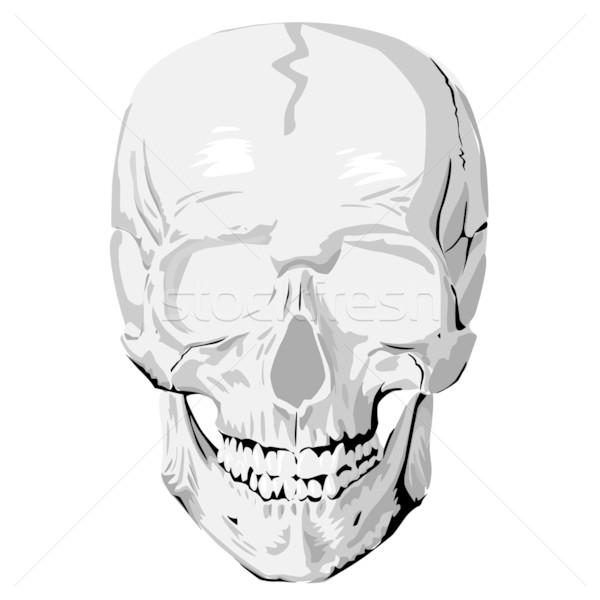 人間 頭蓋骨 グラフィック 白 歯 死んだ ストックフォト © lirch