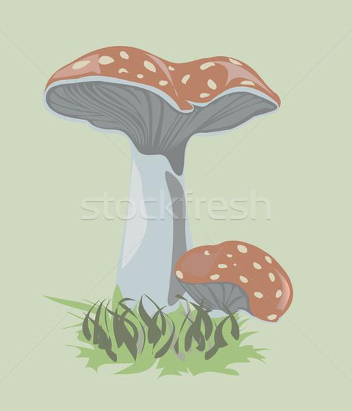 токсичный грибы зеленый трава Сток-фото © lirch