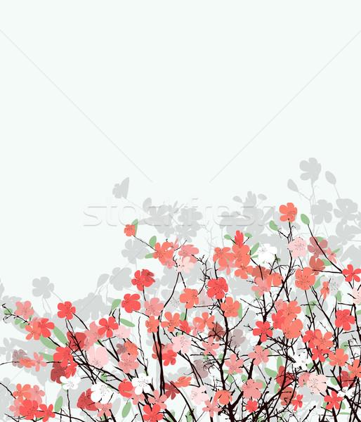 Cherry flower card Stock photo © lirch