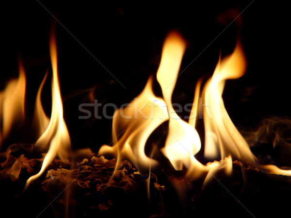 Dancing Flames Stock photo © lisafx