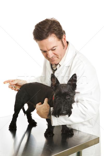 Pobre cãozinho tiro cão infeliz Foto stock © lisafx