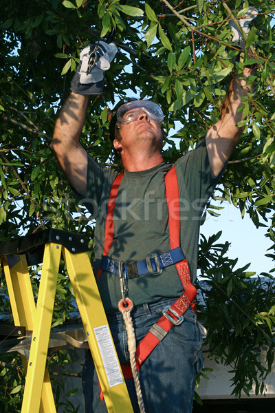 Tree Surgeon on Ladder Stock photo © lisafx